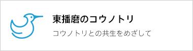 東播磨のコウノトリ