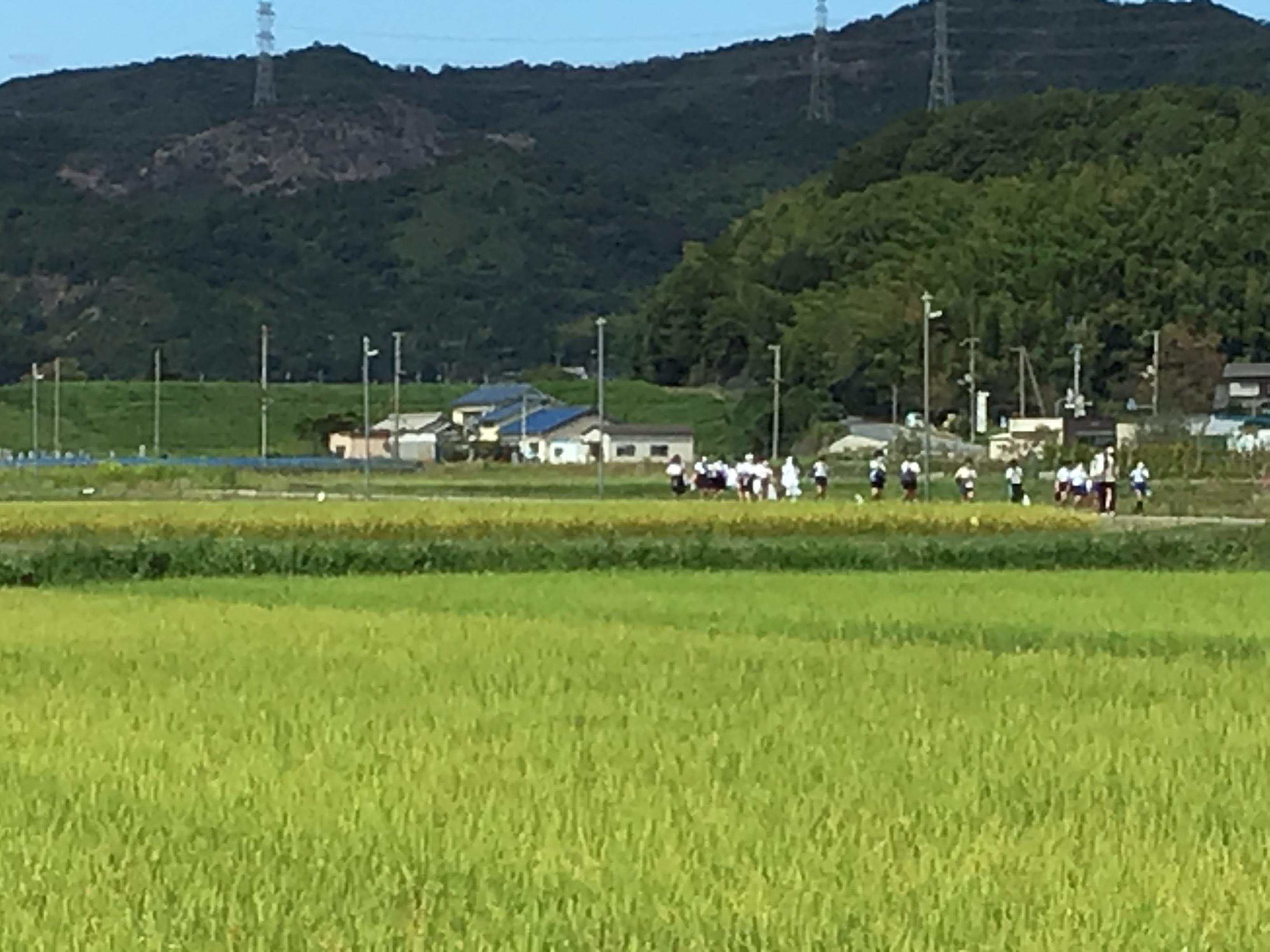 写真中央の地平線(ていうか)が原大池堤体の天端。担任の山本先生を筆頭に垂れた稲の穂を見ながら帰ります。もうすぐ稲刈りだね。