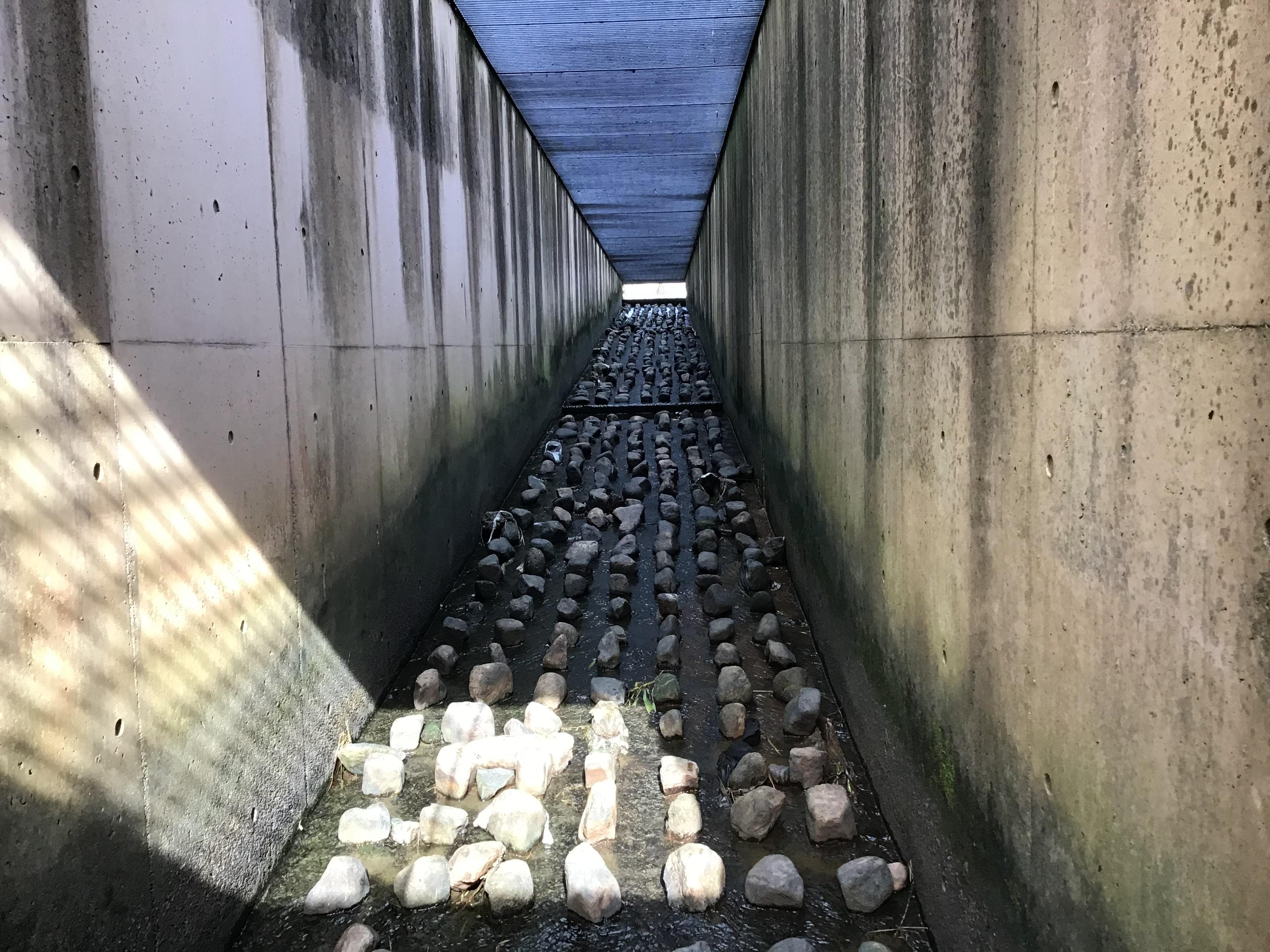 (参考)転倒井堰上流に向かって右側の魚道(勝手に決めつけてます。)天井はグレーチング(雨水桝の大きな蓋)で明るいです。