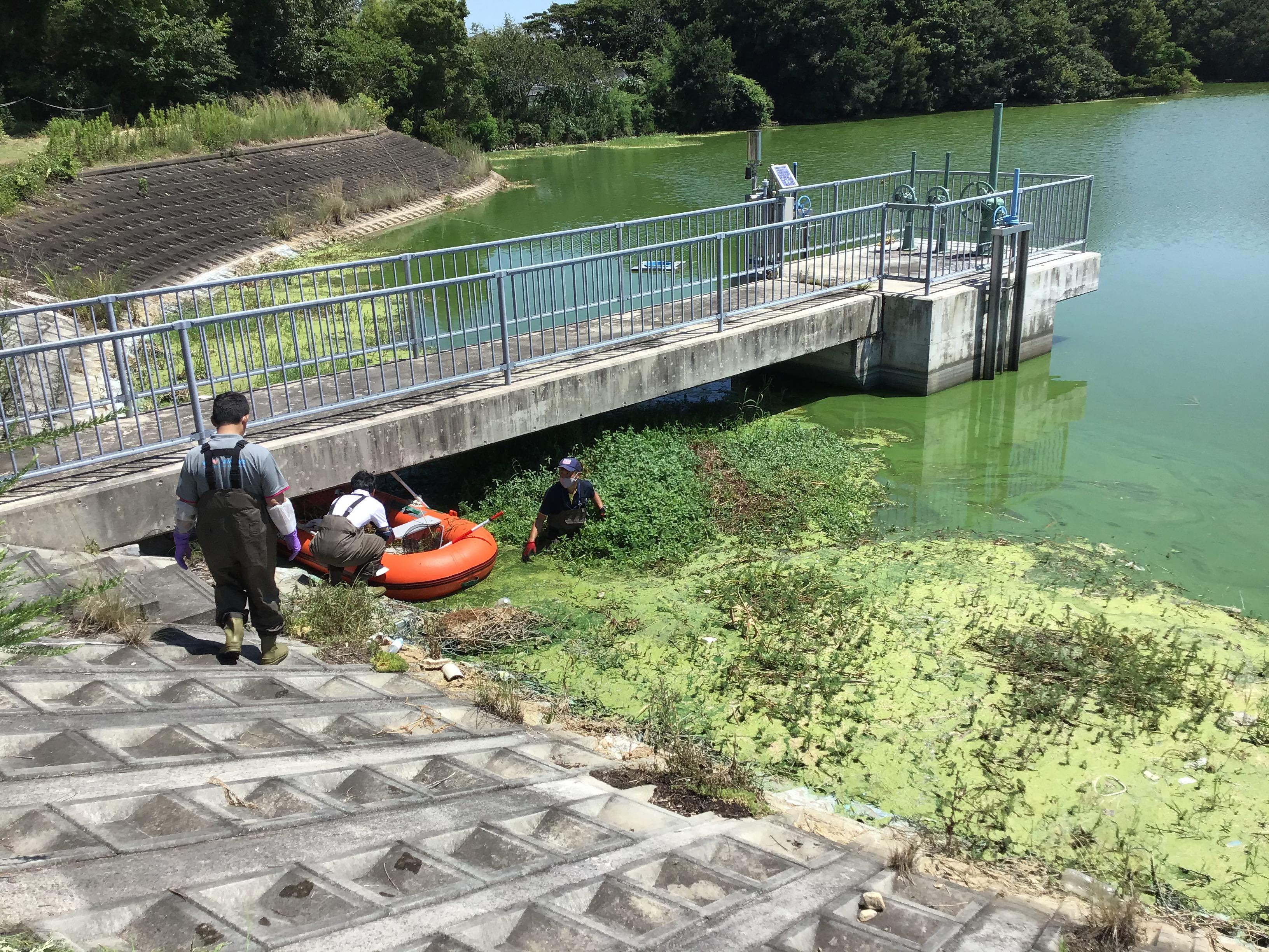 ため池の止水ゲート付近。腰上まで入ってナガエを岸側に集める大本係長。急に深くなってるので、ここも危険です。(写真左は明石市農水課長の福井課長。)