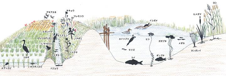イラスト/豊田 純子