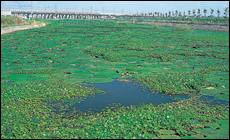 平地のため池の水草群落