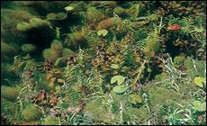 沈水植物群落