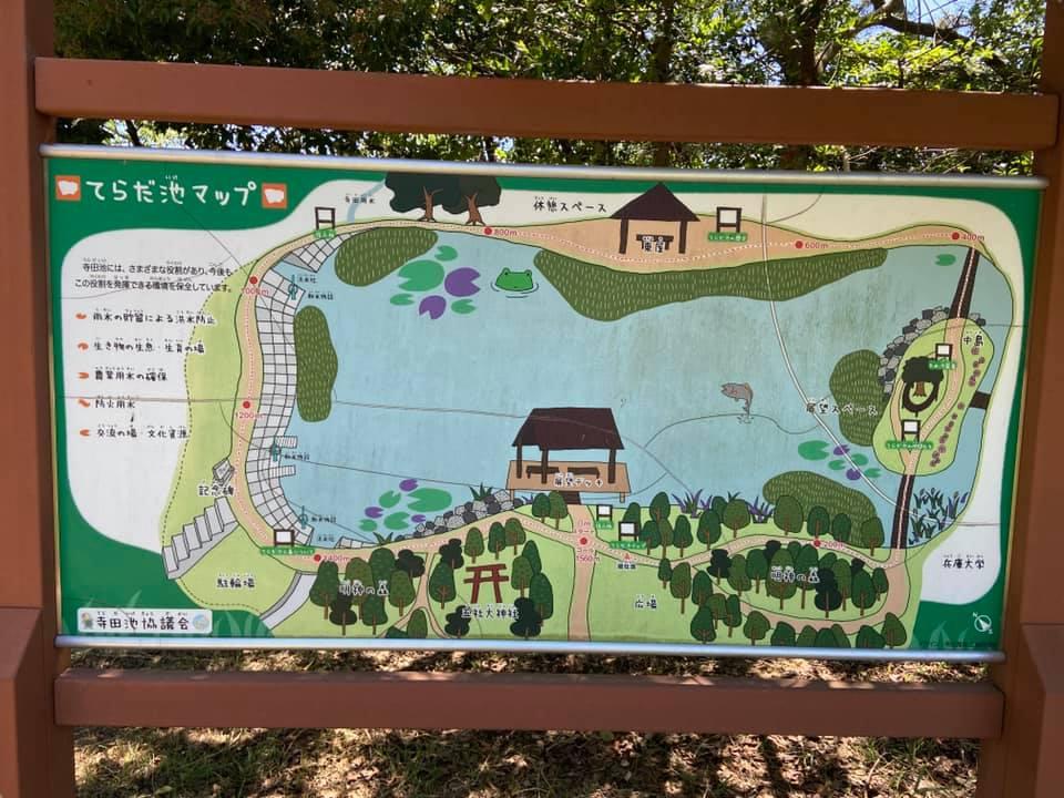 寺田池さつま芋植え付け体験
