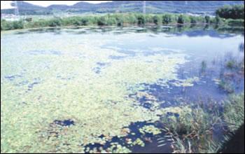 植生豊かなため池