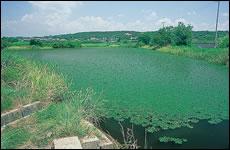 平野部で見られる皿池