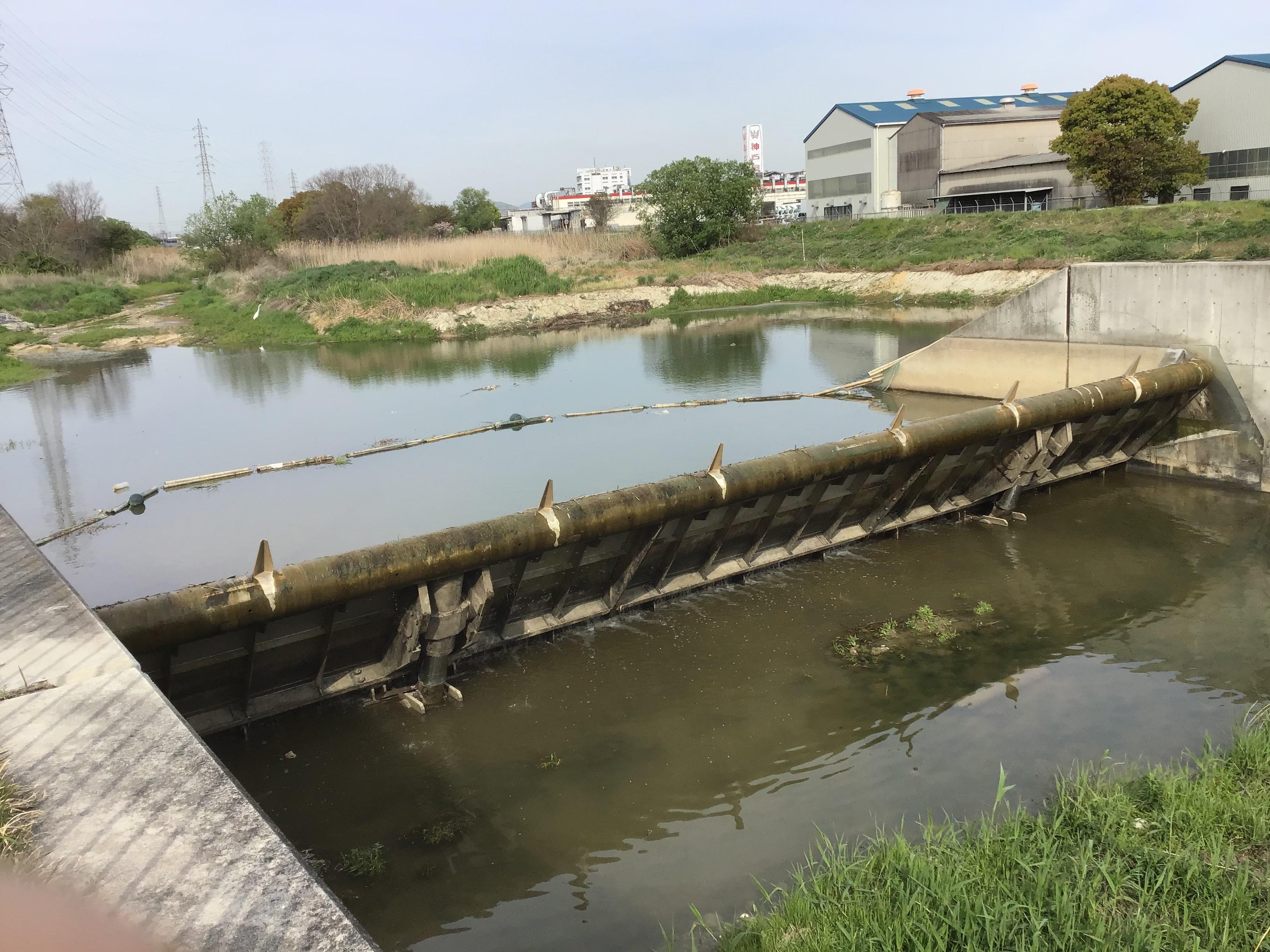 井堰起立状況:写真右側のコンクリート中央部水跡まで水位がきます。(転倒井堰の放流は圧巻。機会があれば。)