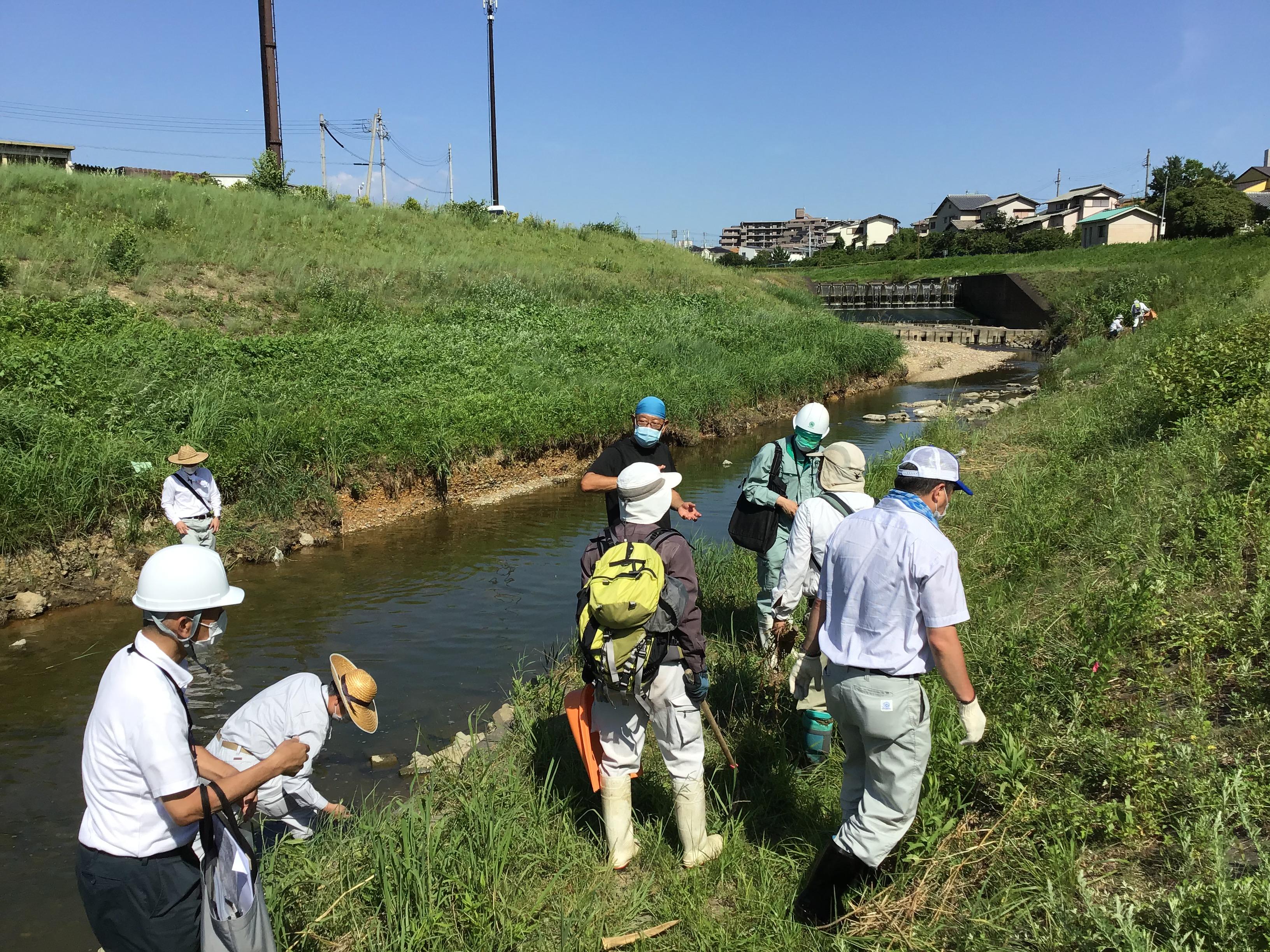 ナガエを探す職員の方々。中央リックサックはエコロジーの丸井代表。河川砂防課の中村主査の背中は既に汗びっしょり💦