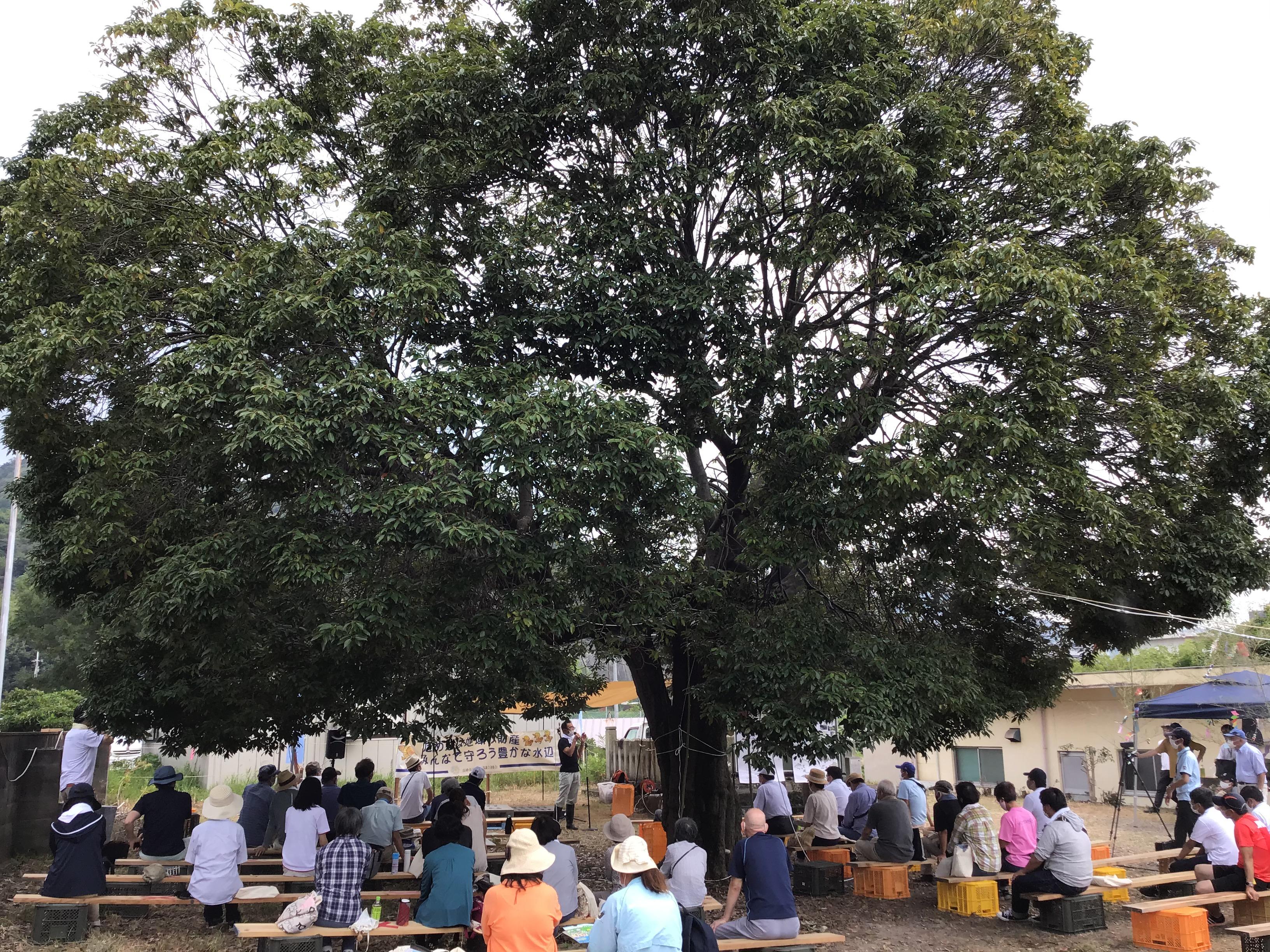 3時限目のアラカシの大木の下で講義される松本修二植物園の研究員(大木の幹の左奥)。阿弥陀の市ノ池のカスミサンショウウオ(今はセトウチサンショウウオ)とか、イモアカガエルの話とか・・まるで大きな菩提樹の木の下で、お釈迦様が弟子に講義しているかの様に見えました。