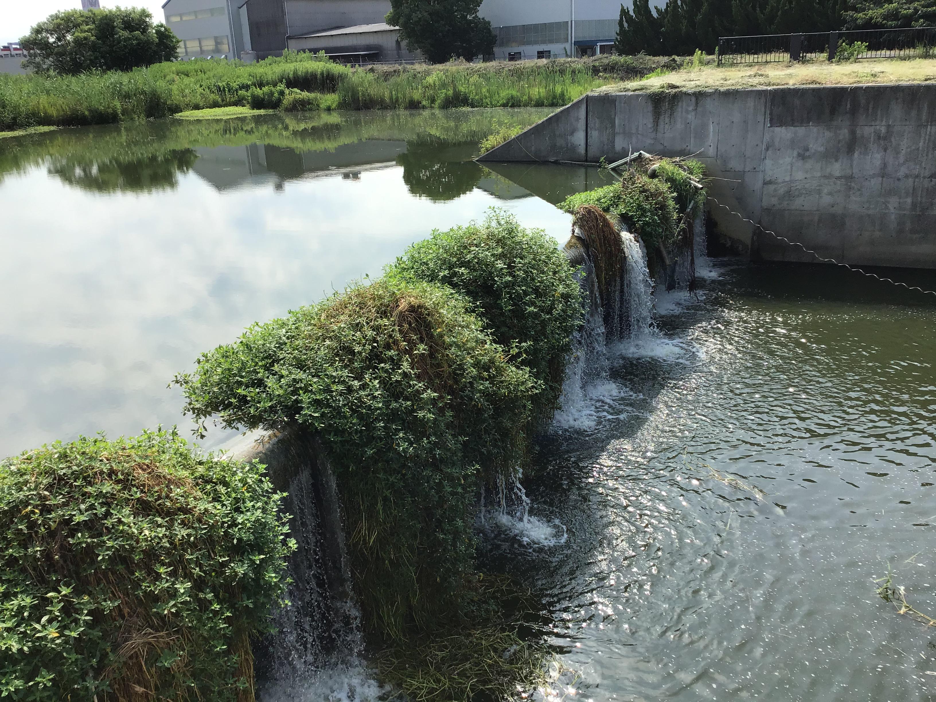 新仏井堰(ゲート)を隣のゲート操作小屋隣から撮影。下流側は水浸60cm。胴長履いて行ける。(加古川流域土地改良事務所の勝治さん測定)