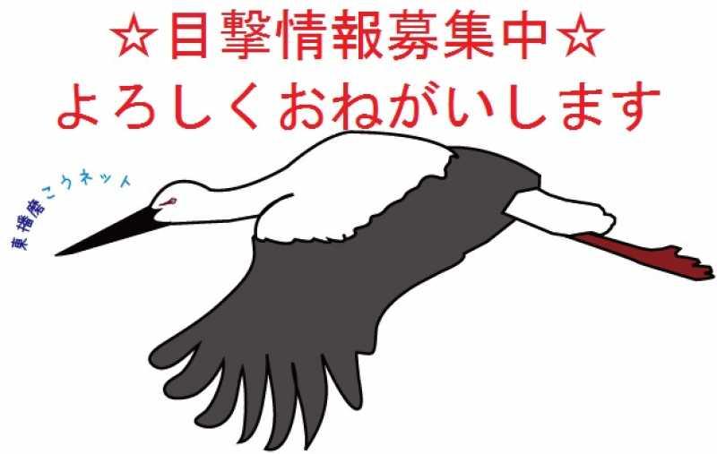 東播磨のコウノトリ情報