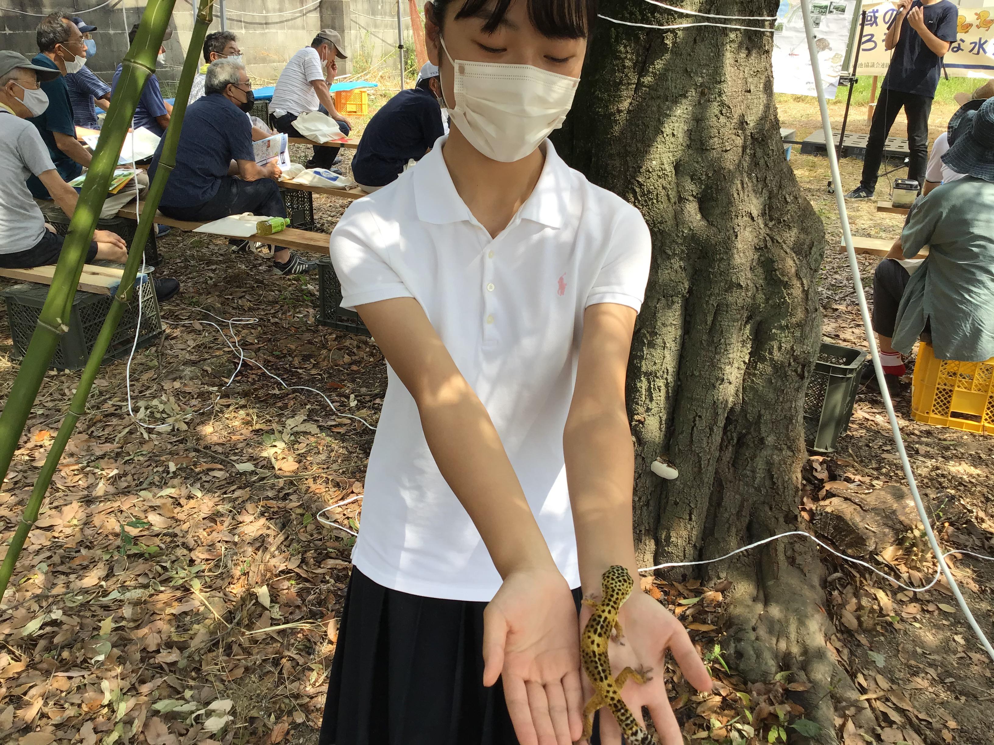 白陵高校の松尾風花さんとヒョウモントカゲモドキ。飼育しているとは(驚)。参加者に見せて回ってます。もう10年(歳)以上の年齢らしい。(寿命15年程)