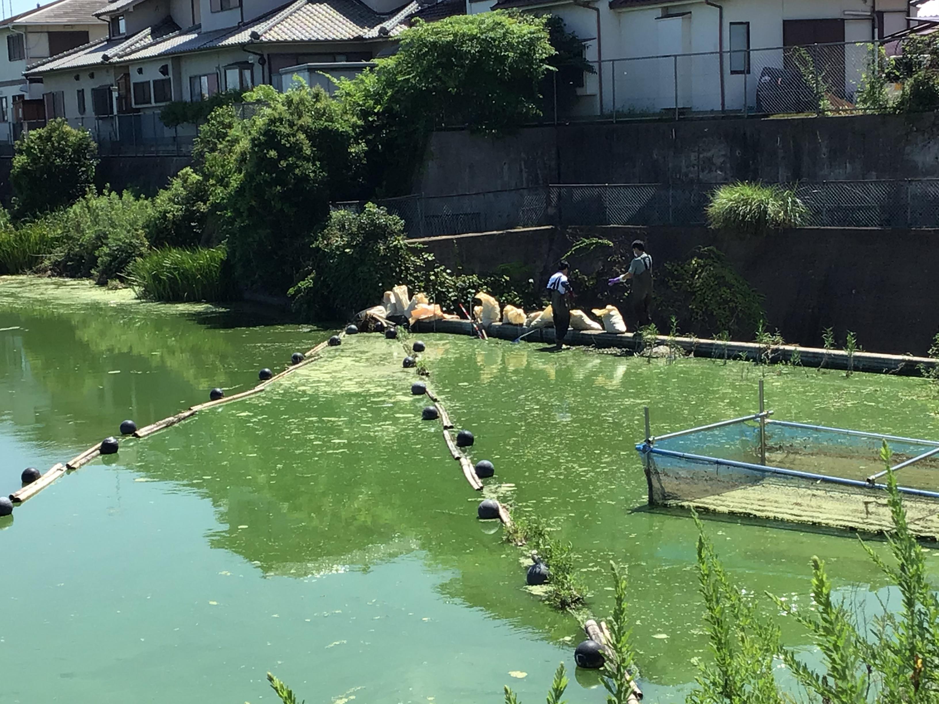 洪水吐き(こうずいばき)とは、ため池の水の排水口の所です。写真の土のう袋のの向こうは奈落の底の様に落ちてます。危険。