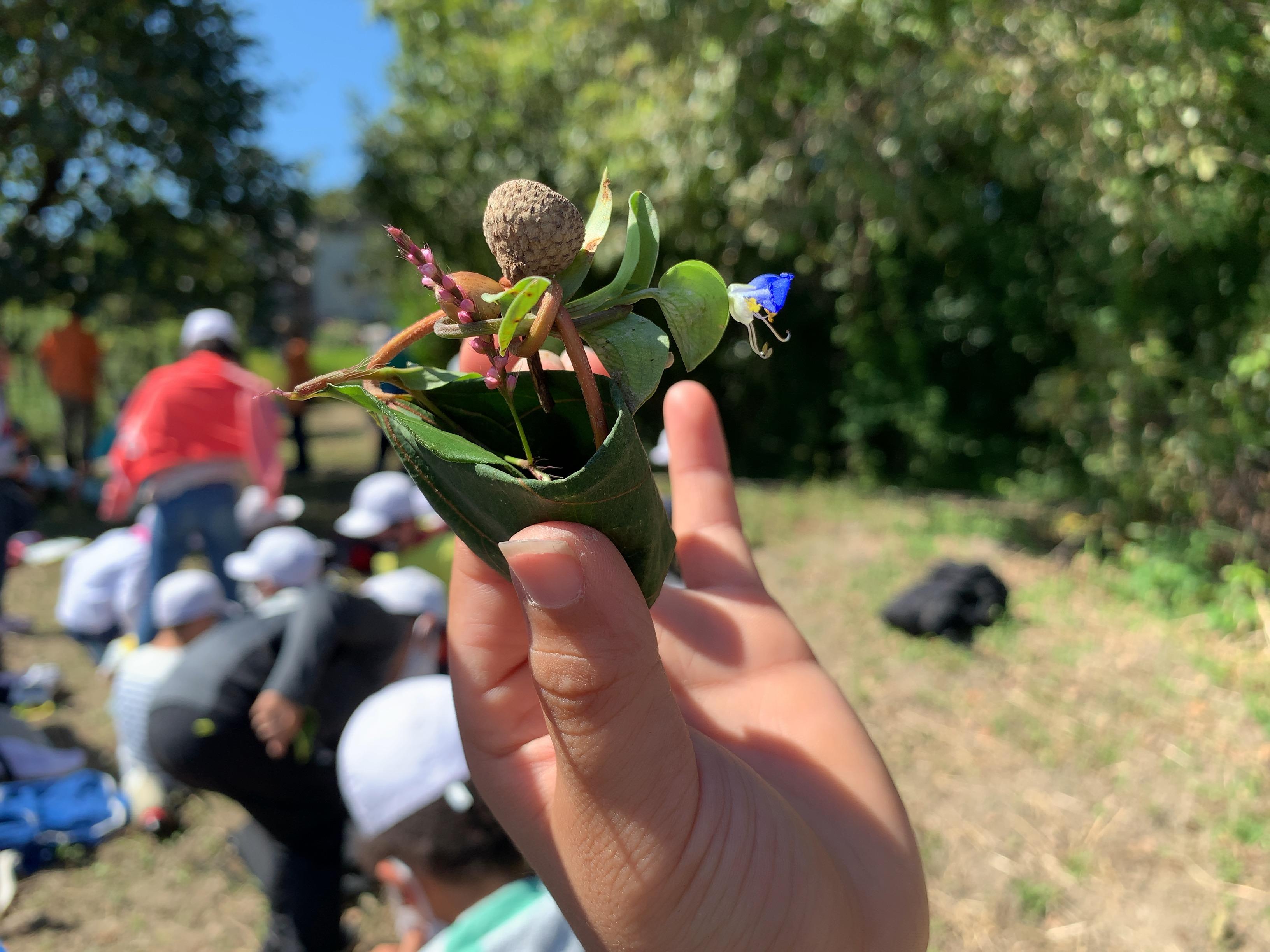 アカメガシワを使った花かごです。見本ですよね。みんなはどうだった。