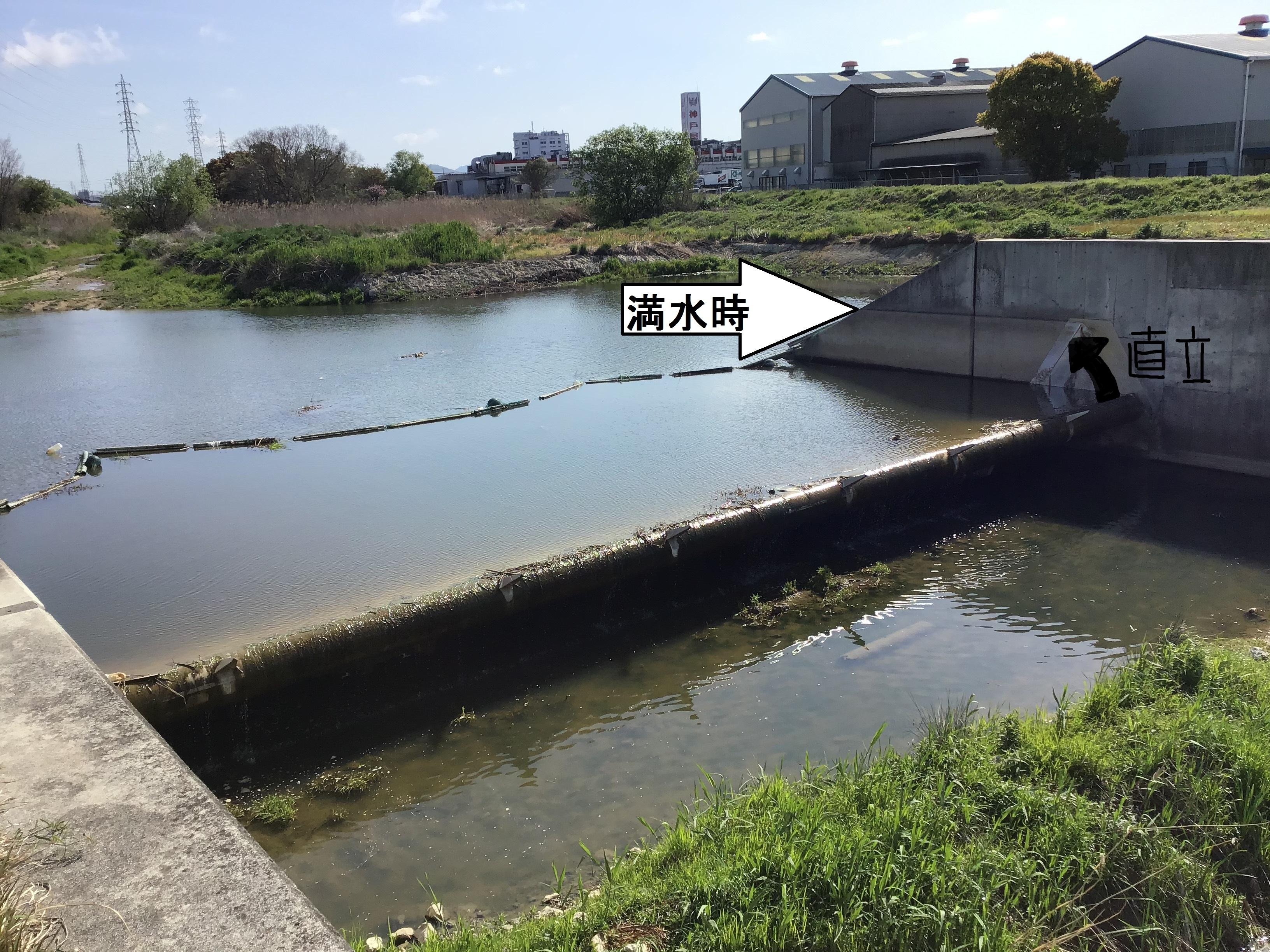 新仏池井堰転倒状況(写真右側コンクリート擁壁部水跡まで満水時水位上昇)