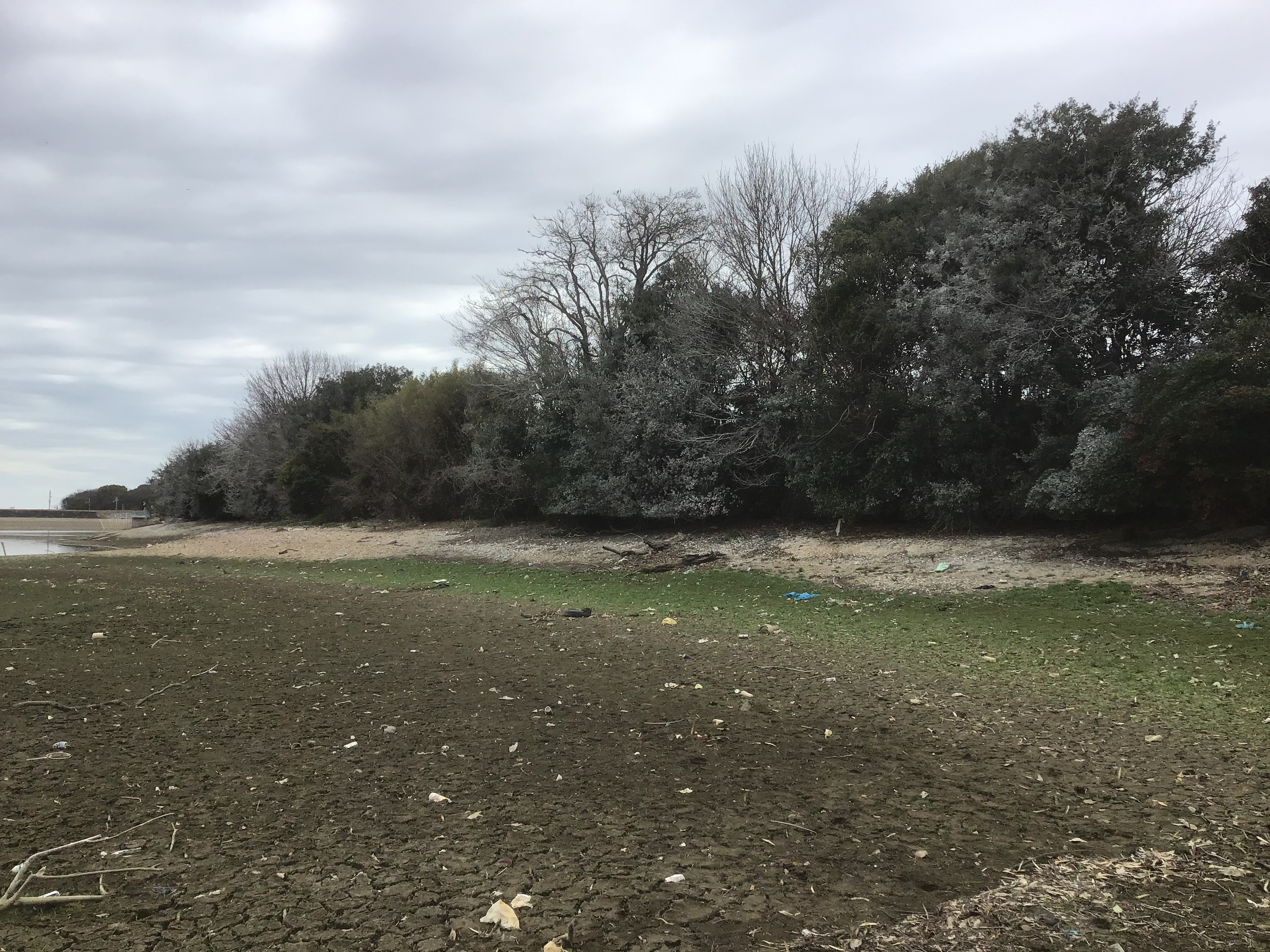 【参考】白く降りかかったカワウの糞害。水利役員さんより「糞がかかった樹は枯れていくんや」
