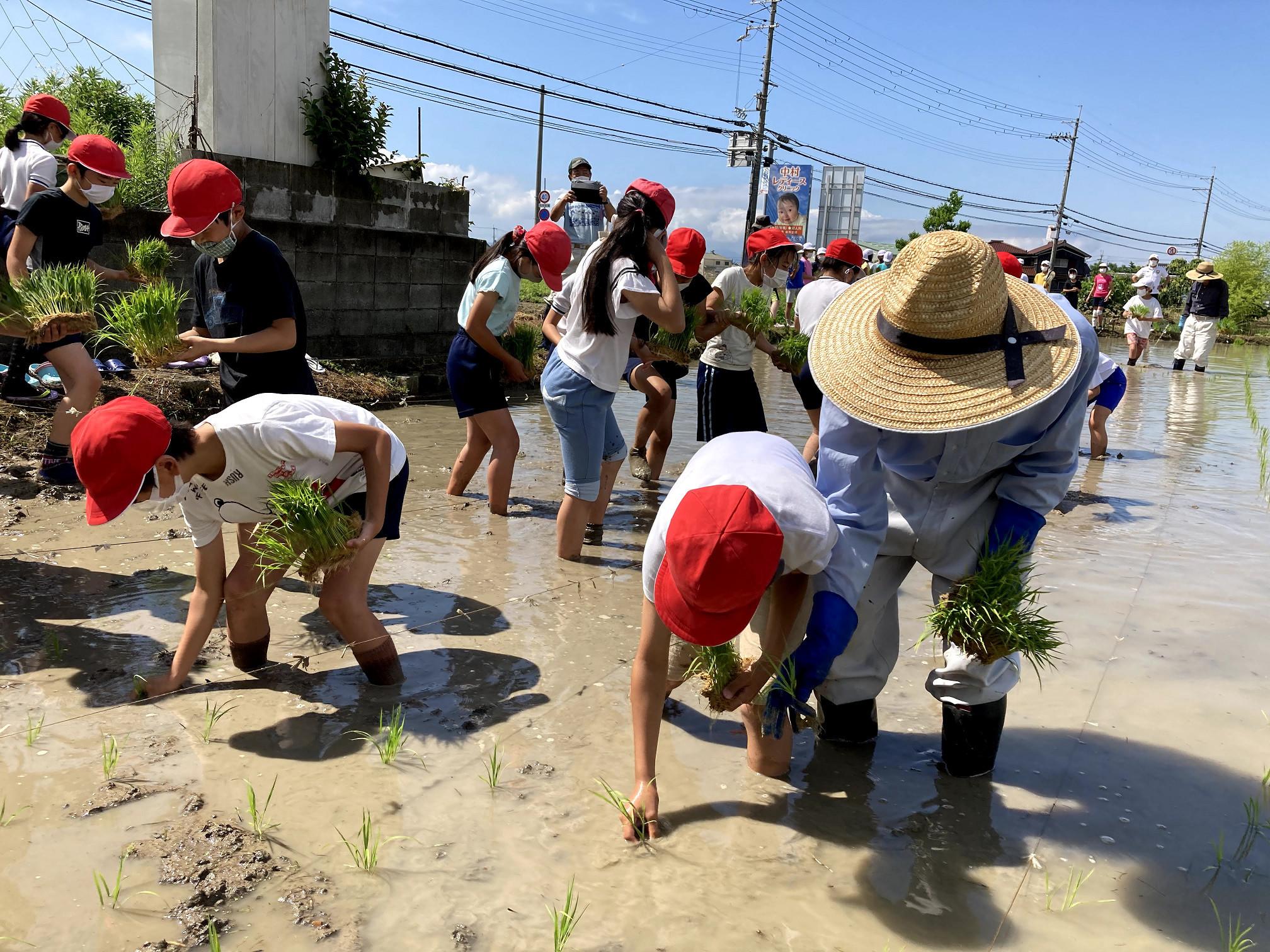 始めて靴下だけで泥の田んぼに入る子供たちと苗の差し方を教える釜谷池協議会の役員さん