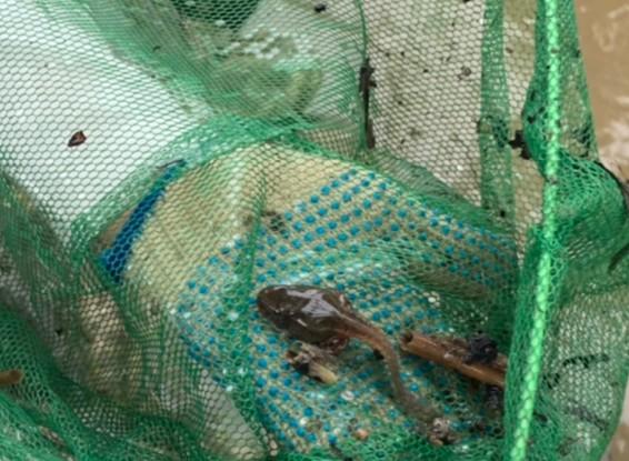 つかまえた❢おたまじゃくしは蛙の子ってね。