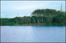 4種のシラサギ類とアオサギ、ゴイサギの6種 が同じ林で繁殖するコロニー
