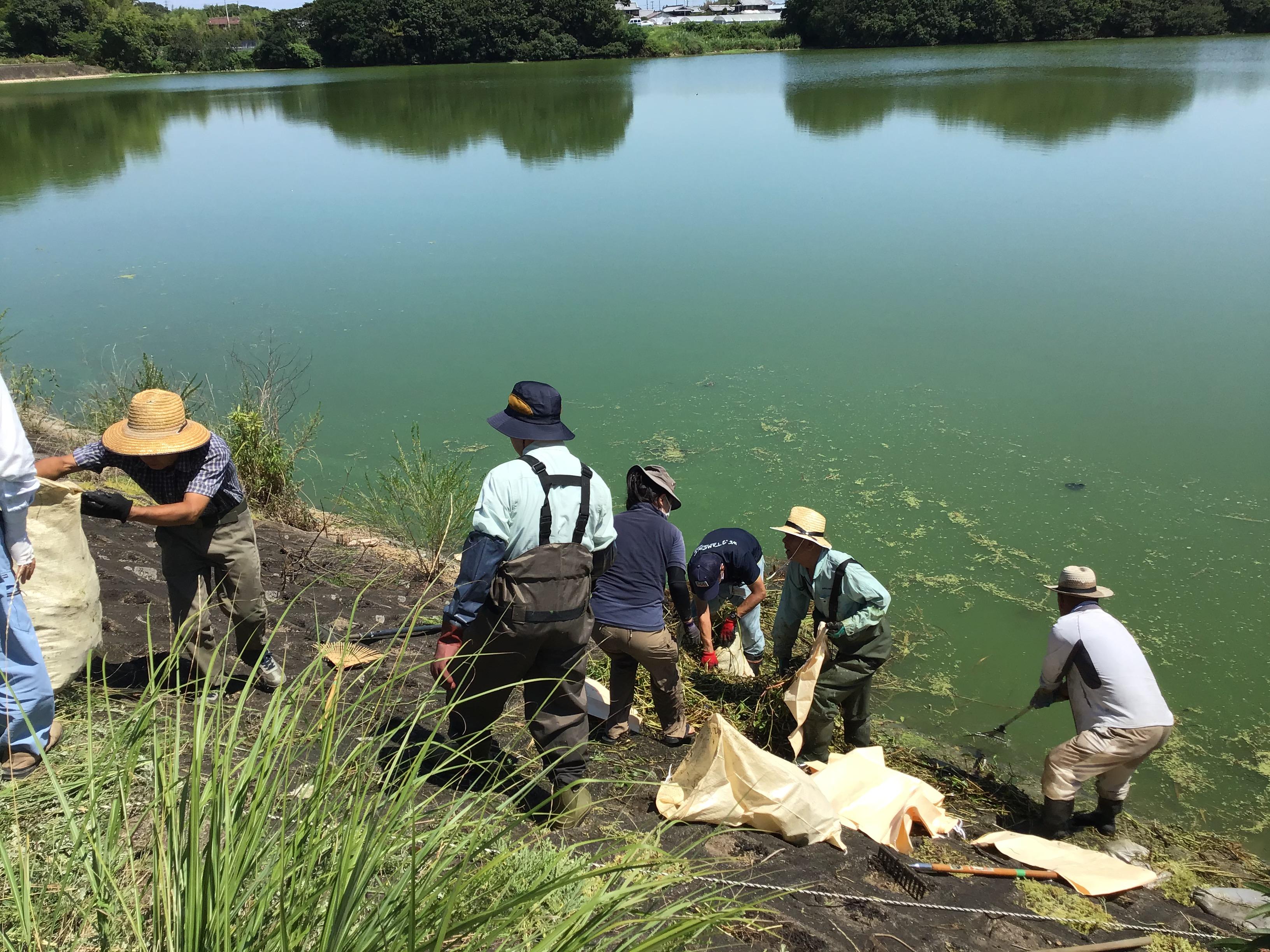 ため池の法面(のりめん)での作業が滑りやすく危険でした。とにかく暑いんです。ボランティアの㈱自然回復の方々も応援に。