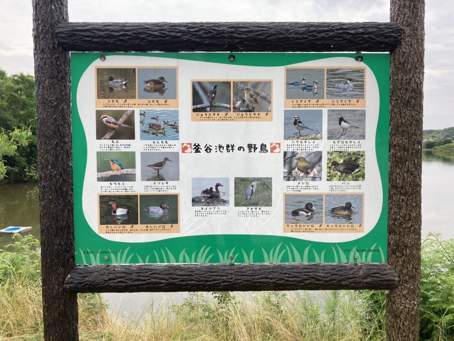 野鳥の看板もたっています