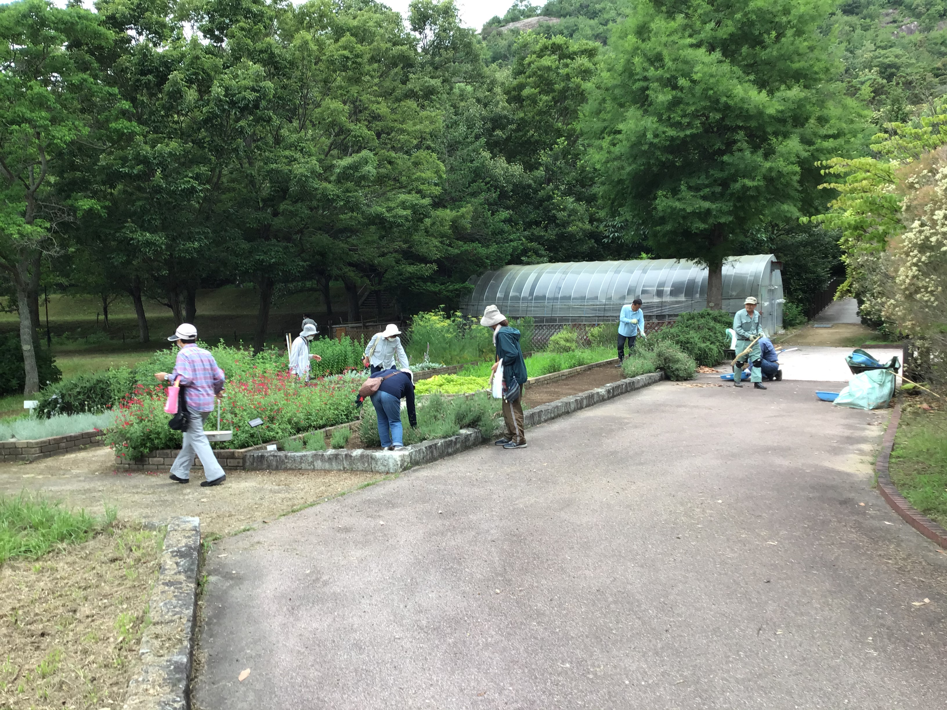 【参考】ワイルドストロベリーっていうボランティア団体が市ノ池公園を月1で清掃奉仕。(主にハーブガーデン)