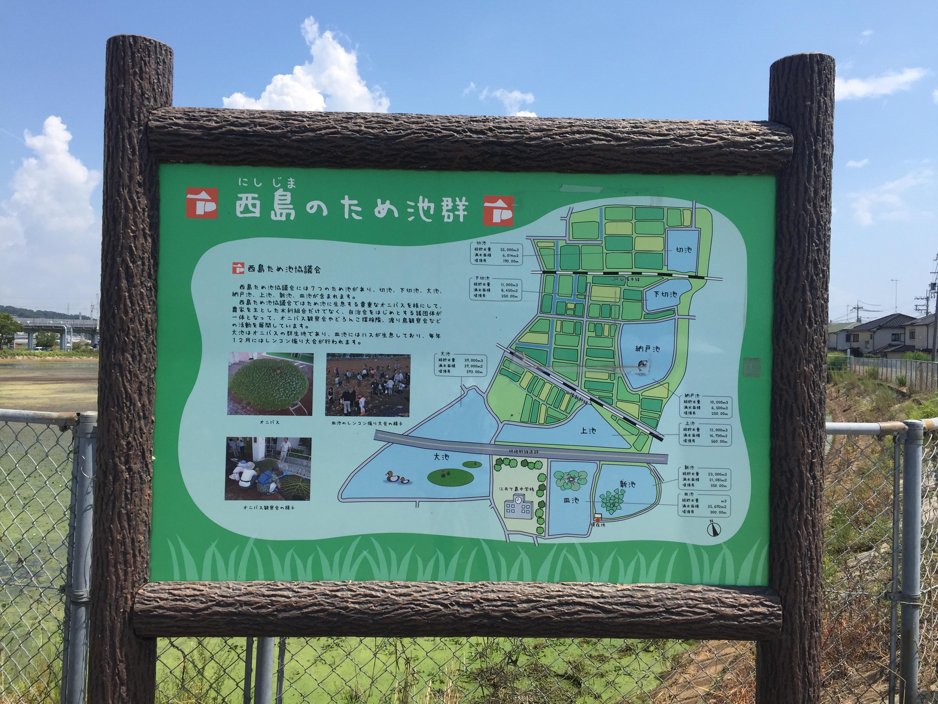 日本最大の水生植物「オニバス」観察会
