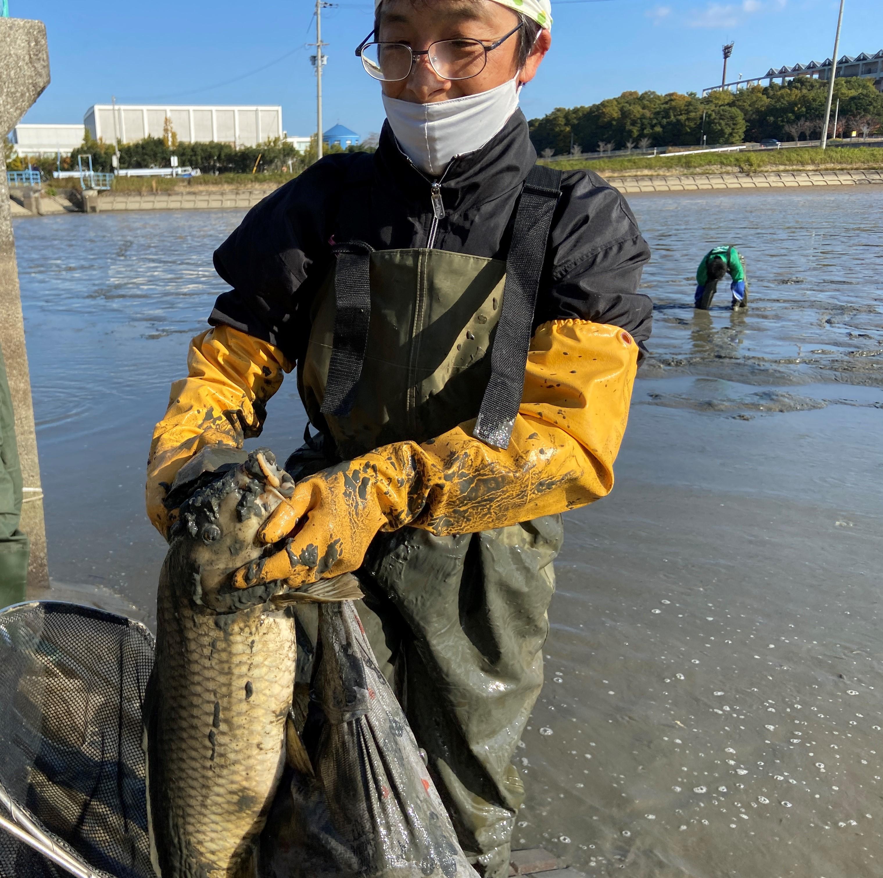 和亀保護の会の西堀さんです。コイの掴み方流石です。他に泥の中からミシシッピアカミミガメを見つけられていました。
