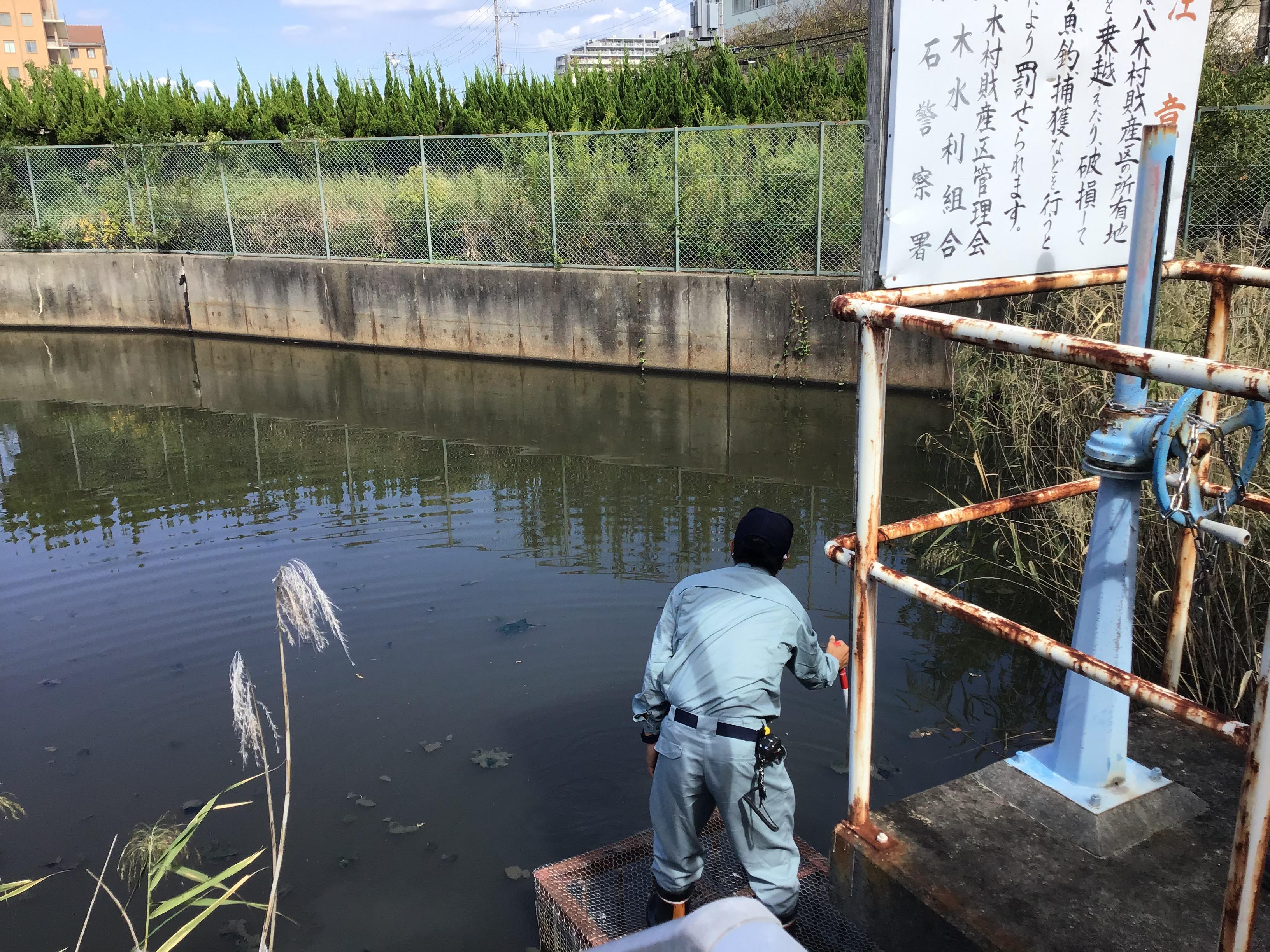 明石市大本係長が唯一水面が見える場所で水位測定(深さ1.0mだとヒメガマが育生しないのか?)