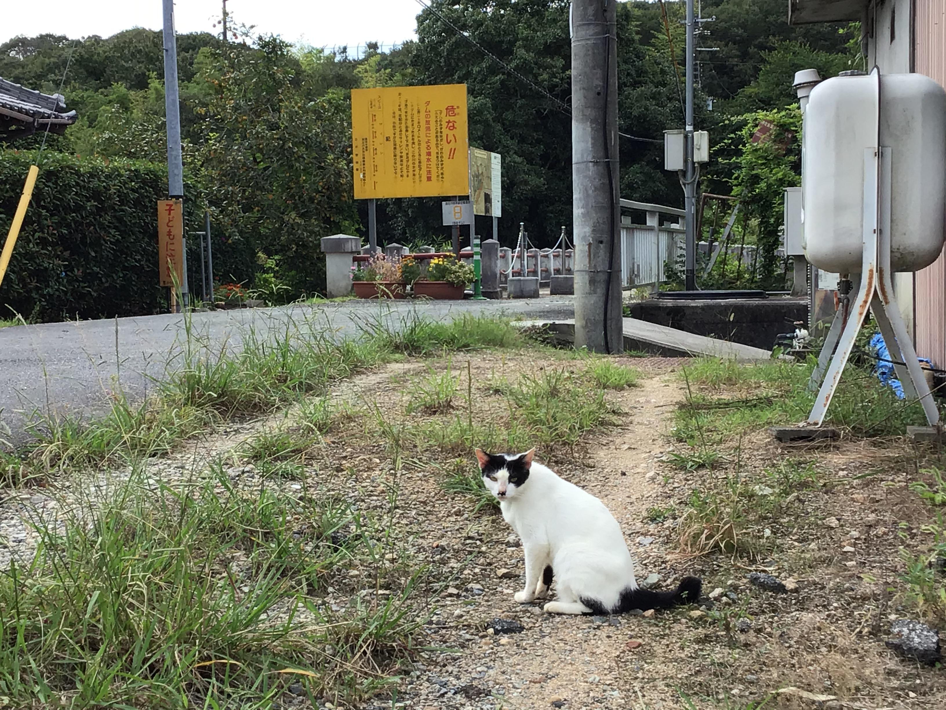 御坂サイフォン水路橋入口の招き猫。『さあ疏水学習が始まるよ。』