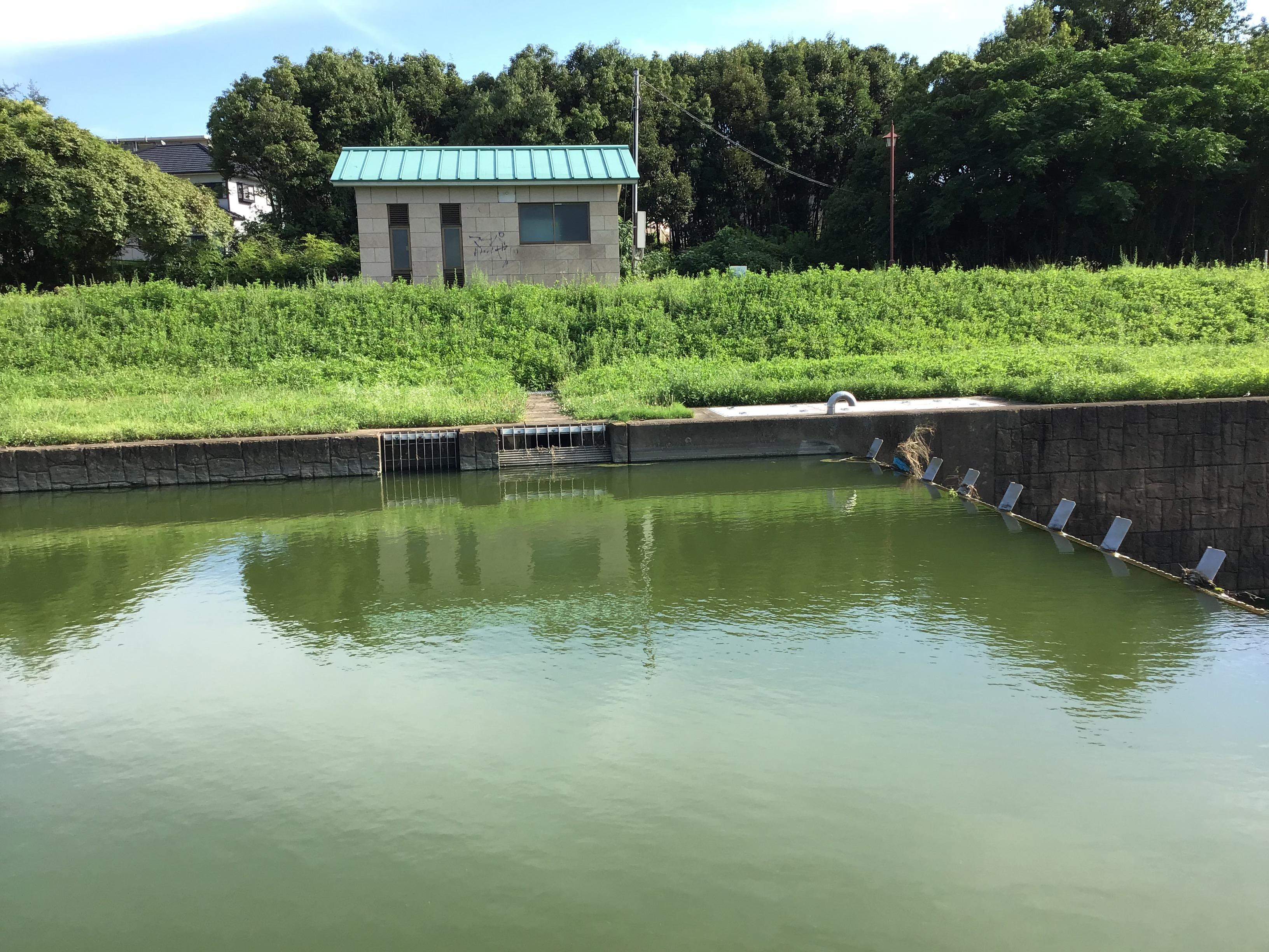 転倒井堰上流部の水田への取水口。水位上昇時には写真右の転倒井堰が倒れ下流に水は流れるそうです。