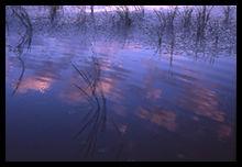 静かな水面は鏡。 空の心を映します。