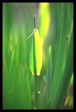 水草の春のさえずり。